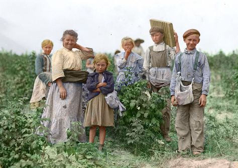 800px-Polish_berry_pickers_colourPolish immigrants working on the farm, 1909.