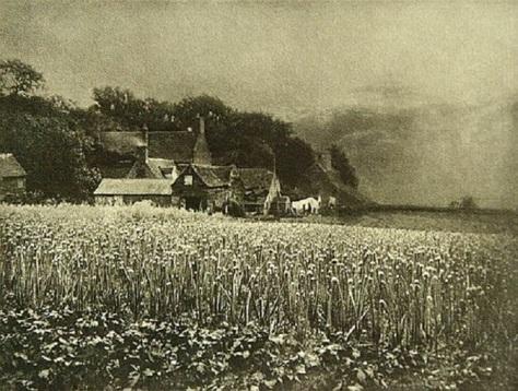 George_Davison-The_Onion_FieldGeorge Davison – The Onion Field (1890)