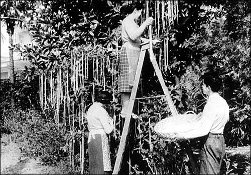 An image of three people supposedly harvesting spaghetti from trees; an early media hoax which demonstrates the need for information literacy