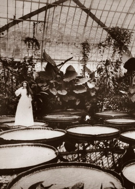 1895 Angie Means stands on a giant Amazonian water lily pad, Victoria regia, in the Phipps Conservatory's Victoria room.