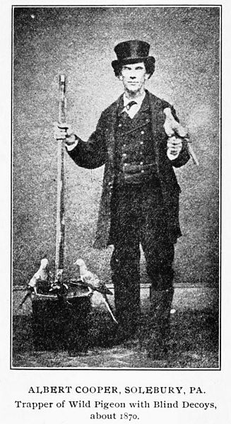 Albert Cooper, a trapper who used decoy pigeons to trap hundreds of wild birds (c. 1870)Decoy_Passenger_Pigeon