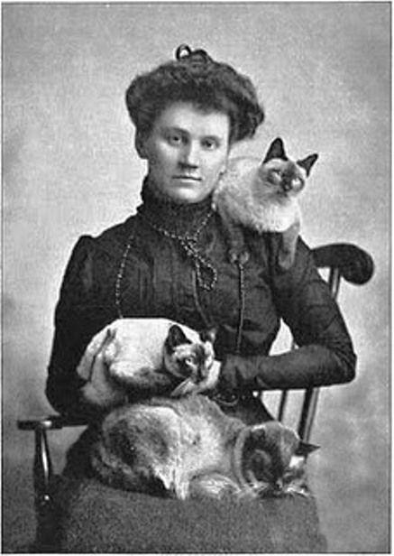 19th century cats