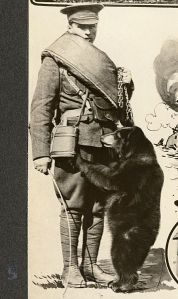 355px-winnie_the_bear_1915winnie-the-bear-as-a-cub-with-an-unidentified-canadian-soldier