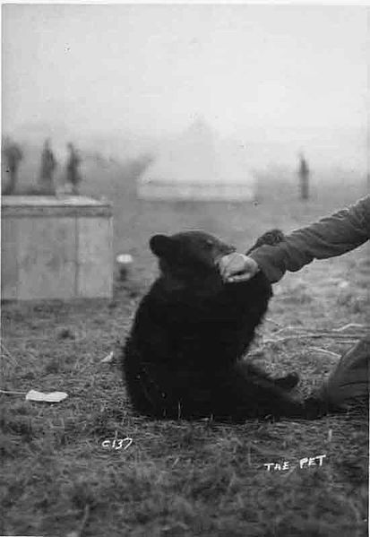 413px-winnie_the_petwinnipeg-winnie-the-female-black-bear-from-canada-who-inspired-winnie-the-pooh-1914