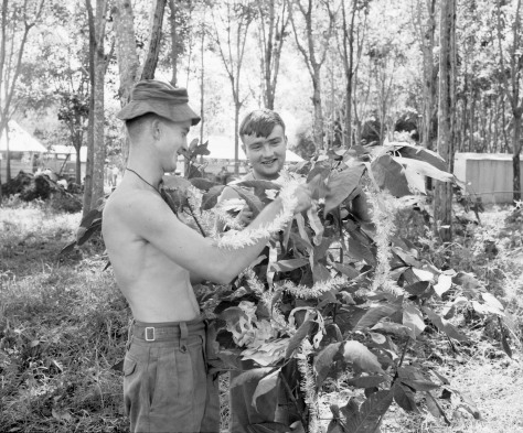 Christmas_in_Vietnam,_1967_(3117470156)Nui Dat, Vietnam. 1967-12. Newly arrived members of 3rd Battalion, The Royal Australian Regiment (3RAR), preparing their base camp for the Christma