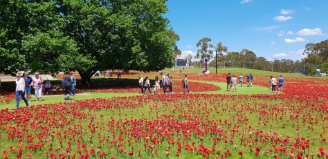 Thousands of Poppies First world War One Sonya Heaney 11th November 2018 Australian War Memorial Canberra.