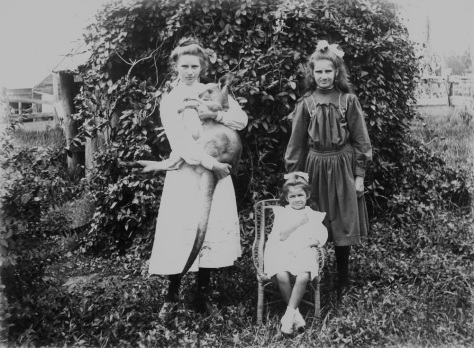 StateLibQld_1_100472Three girls and a kangaroo, 1900-1910. The girls pose in a garden in front of a shed covered in creepers. The girl on the right stands and holds the kangaroo aloft