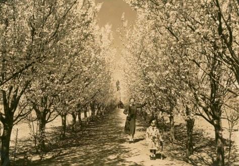 Canberra_in_springtime_(5016323733) Vintage